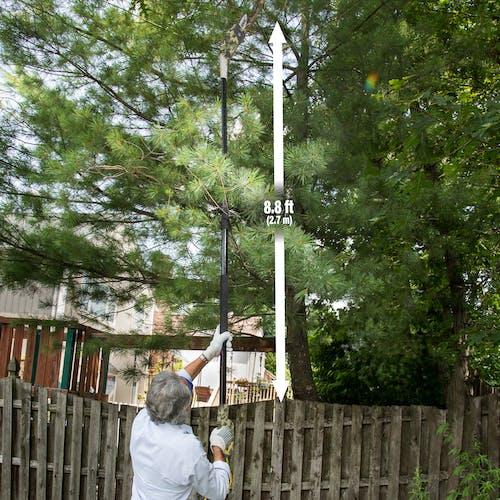 SWJ803E-CMO electric pole saw